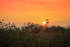 Заход солнца на поле травы Стоковое фото RF