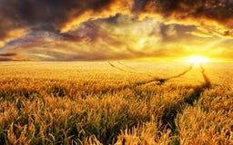 Заход солнца на поле, фокус на заводах переднего плана Стоковые Изображения RF