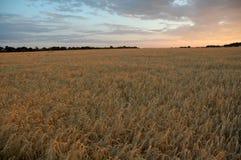 Заход солнца на поле Стоковая Фотография