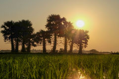 Заход солнца на поле Стоковые Изображения
