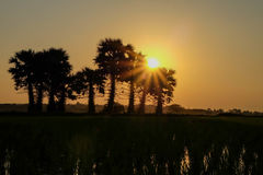 Заход солнца на поле Стоковые Фото