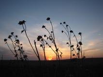 Заход солнца на прерии стоковое изображение