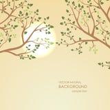 Заход солнца на предпосылке ветвей дерева Стоковые Изображения