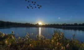 Заход солнца на пруде чесапикского залива с летать гусынь Стоковое Изображение RF