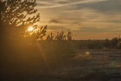 Заход солнца над пущей стоковая фотография