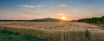 Заход солнца над пшеничным полем Стоковая Фотография RF