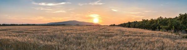 Заход солнца над пшеничным полем Стоковые Изображения RF