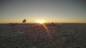 Заход солнца над пляжем с чайками во времени складывает акции видеоматериалы
