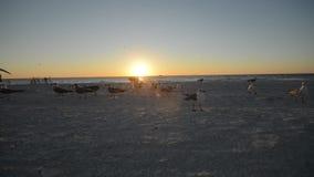 Заход солнца над пляжем с чайками сток-видео