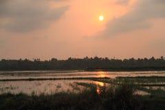 Заход солнца на рисовых полях Стоковое Изображение