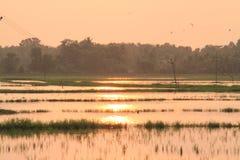 Заход солнца на рисовых полях Стоковое фото RF
