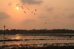 Заход солнца на рисовых полях Стоковые Изображения RF