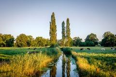 Заход солнца на романтичном реке в ландшафте Twente лета Duch Стоковое Изображение RF