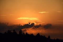 Заход солнца над сосновым лесом, красивое покрашенное небо Стоковые Фотографии RF