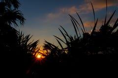 Заход солнца над тропическими джунглями Стоковая Фотография