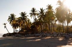 Заход солнца на тропической береговой линии Стоковое Изображение RF