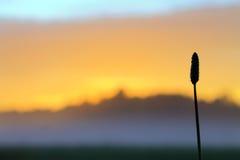 Заход солнца на луге в тумане Стоковая Фотография RF
