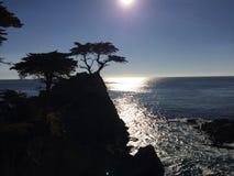 Заход солнца на уединённом Cypress Стоковые Фотографии RF