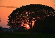 Заход солнца на форме сада мой университет Стоковое Фото