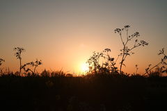Заход солнца на dike в Vianen, Нидерландах Стоковое Изображение RF
