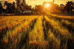 Заход солнца обрабатываемой земли Стоковая Фотография RF