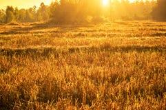 Заход солнца обрабатываемой земли Стоковая Фотография