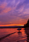 Заход солнца озера Leman и красивый лебедь Стоковое Изображение