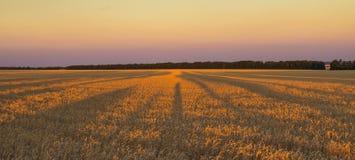 Заход солнца около поля Стоковые Фото