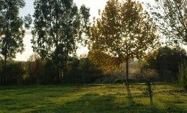 Заход солнца осени в парке при лучи солнца идя через желтые листья дерева Стоковая Фотография