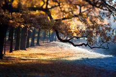 Заход солнца осени в парке Стоковая Фотография