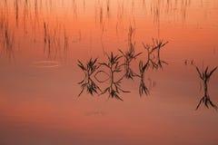 Заход солнца осени на озере Стоковое Фото