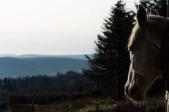 Заход солнца лошади наблюдая Стоковые Фото