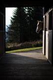 Заход солнца лошади наблюдая Стоковая Фотография