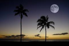 Заход солнца пальм около полнолуния положения пляжа океана тропического Стоковое Изображение RF