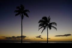 Заход солнца пальм около положения пляжа океана тропического Стоковые Изображения