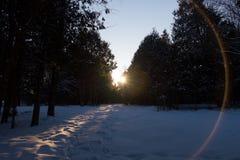 Заход солнца пирофакела объектива Стоковое Фото