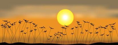 заход солнца поля Стоковые Изображения RF