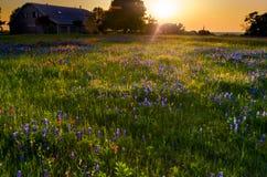 Заход солнца поля Wildflower Стоковые Фотографии RF