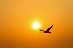 Заход солнца птицы силуэта Стоковые Фотографии RF