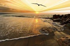 Заход солнца птицы Стоковые Фото