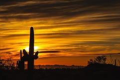 Заход солнца пустыни Аризоны Senoran Стоковое Изображение RF