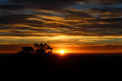 Заход солнца пустыни с силуэтом дерева Стоковые Изображения
