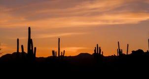 Заход солнца пустыни Стоковое Изображение