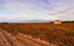 заход солнца Румынии пущи осени Виноградник и дом в Провансали Стоковое Фото