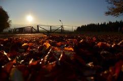 заход солнца Румынии пущи осени Стоковая Фотография