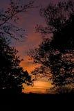 заход солнца Румынии пущи осени Стоковые Фото