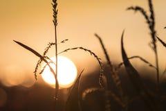 заход солнца Румынии пущи осени Стоковые Изображения