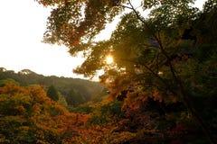 заход солнца Румынии пущи осени Стоковое Фото