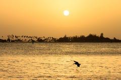 Заход солнца Сан-Хуан пеликана Стоковая Фотография RF