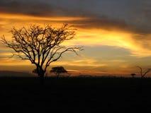 Заход солнца сафари Стоковые Изображения RF
